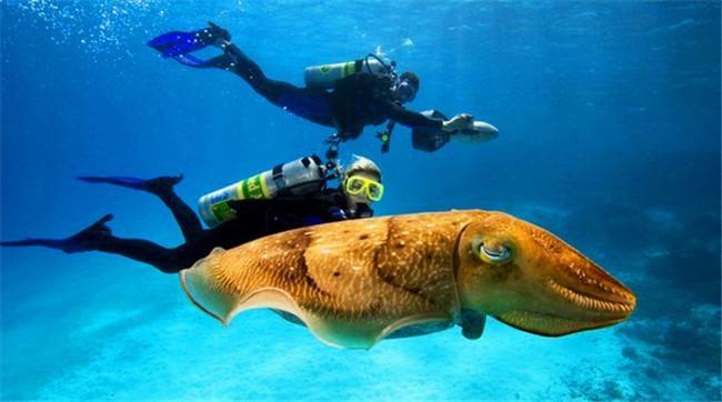 壁纸 动物 海底 海底世界 海洋馆 水族馆 鱼 鱼类 650_362